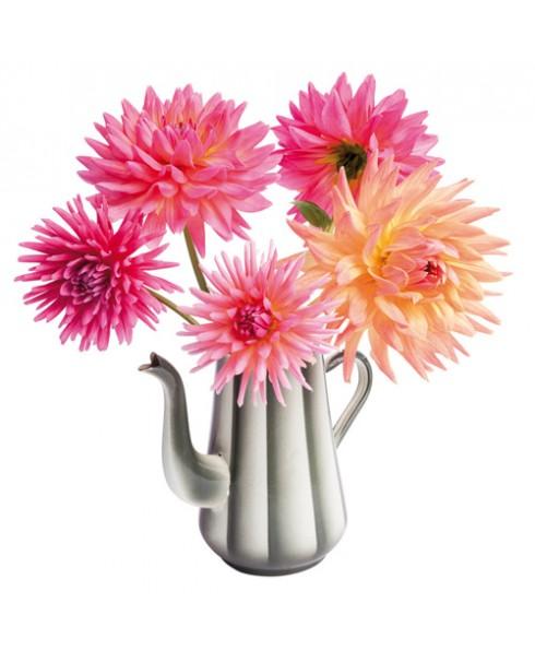 Flatflower Dahlia T