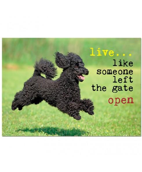 Postkaart live like