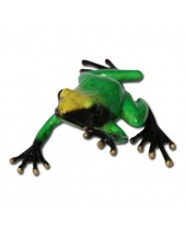 Groene regenwoudkikker