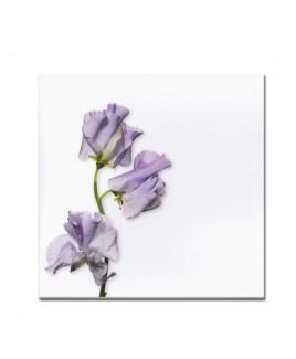 Lila bloem